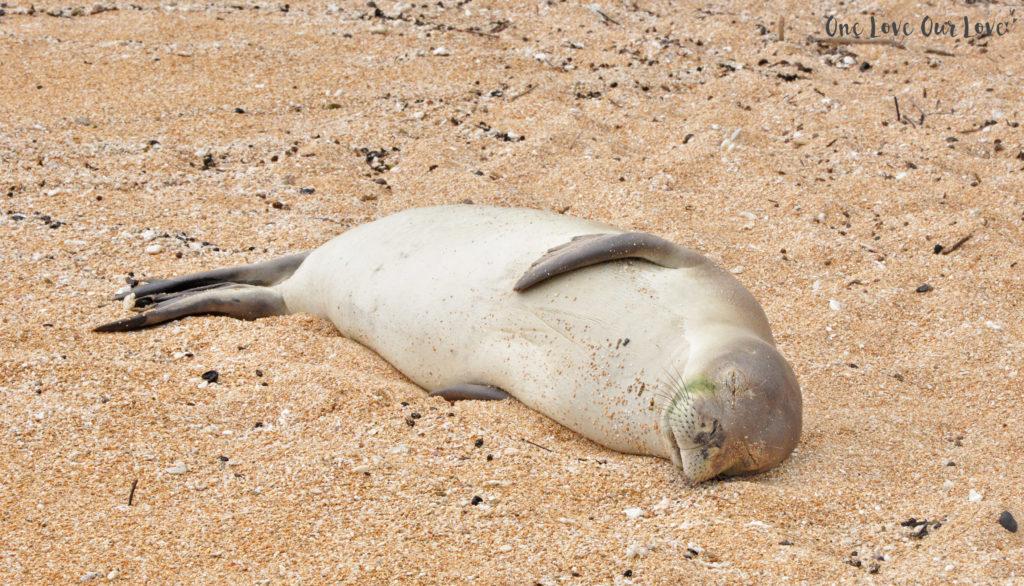 white-seal
